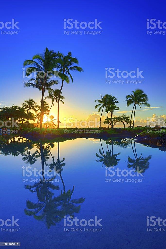 Sunrise behind palm trees in Kauai, Hawaii royalty-free stock photo