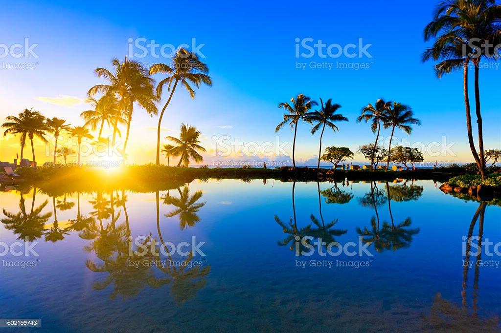 Sunrise behind palm trees in Kauai, Hawaii stock photo