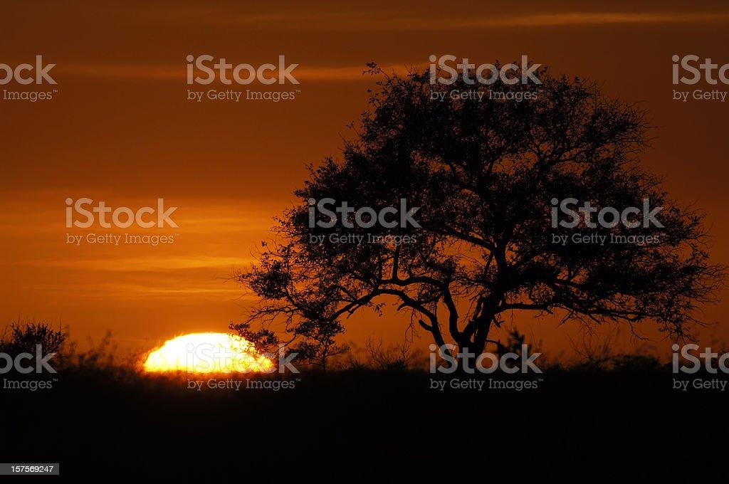 Sunrise beside a tree in Sabi Sands stock photo