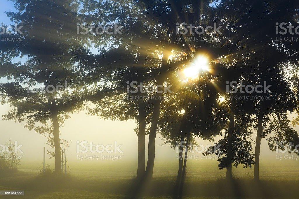 Sunrise Bursts Through Dense Fog and Trees royalty-free stock photo