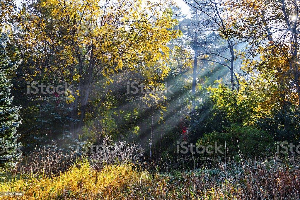 Sunrise Bursts Through Trees on Misty Autumn Morning royalty-free stock photo