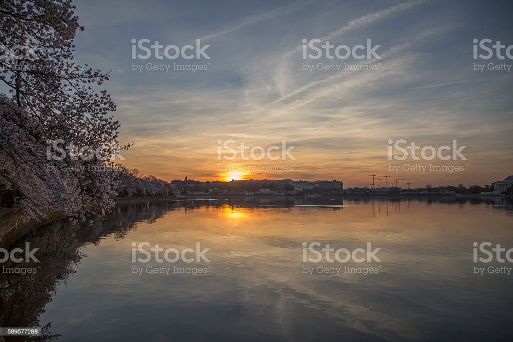 DC Sunrise during cherry blossoms stock photo