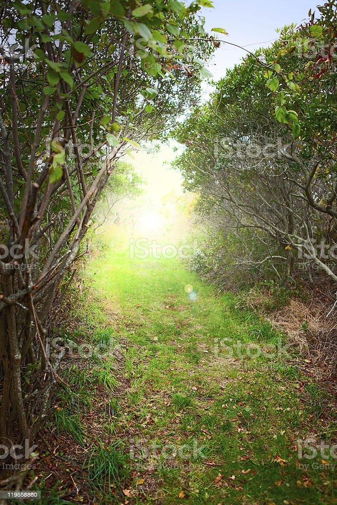 Sunrise forest path royalty-free stock photo