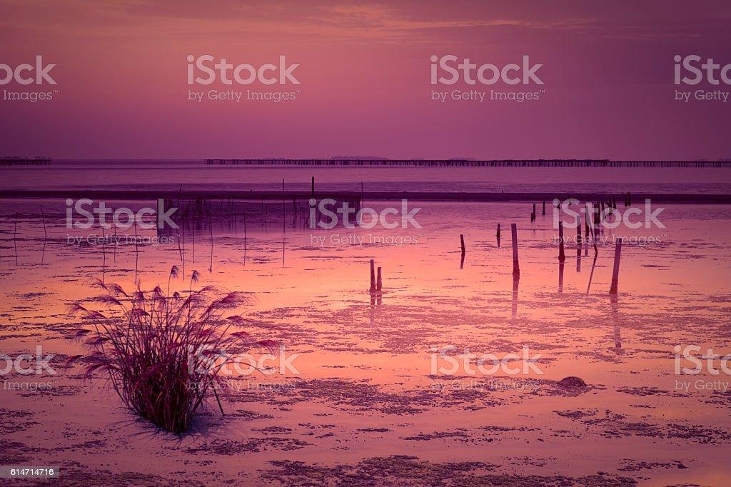Sunrise from Delta del Ebro stock photo