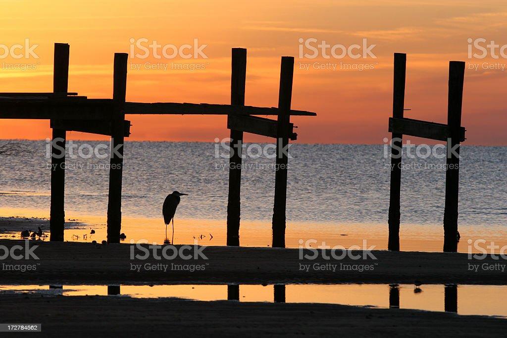sunrise heron and pier royalty-free stock photo