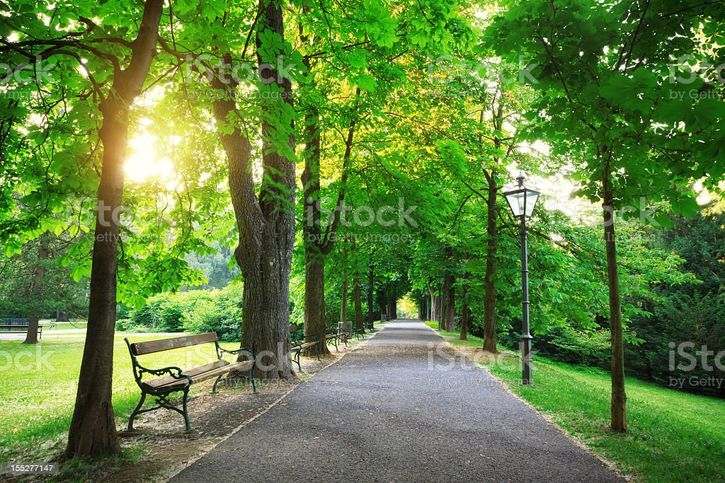 Sunrise In a Green Park royalty-free stock photo