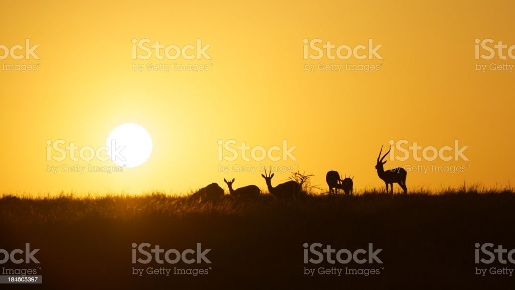 Sunrise in Africa royalty-free stock photo
