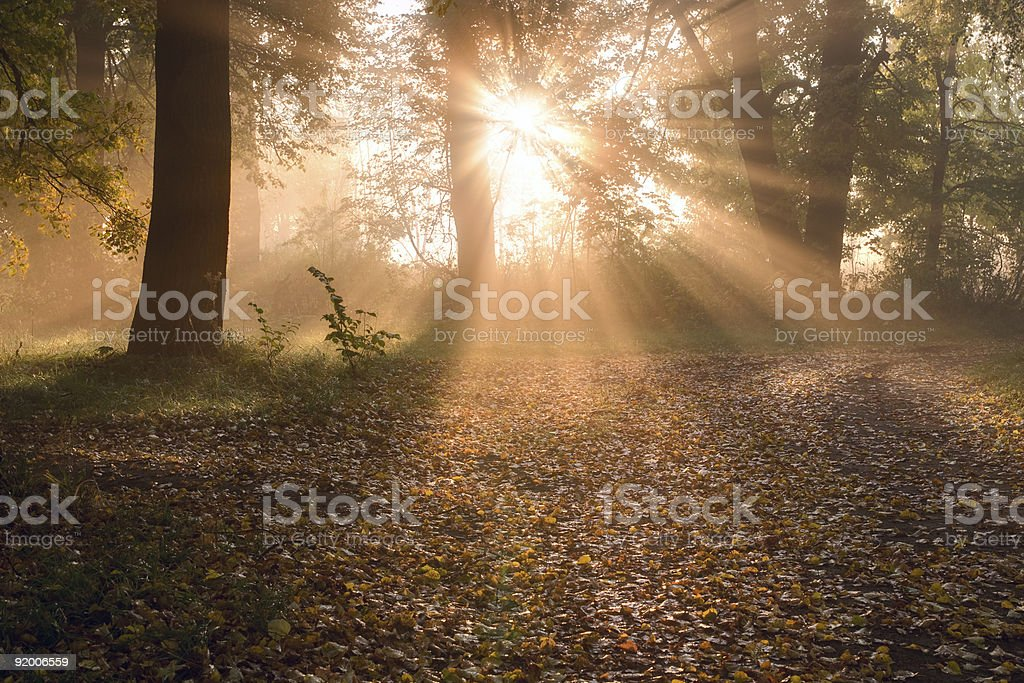 Sunrise in foggy forest royalty-free stock photo