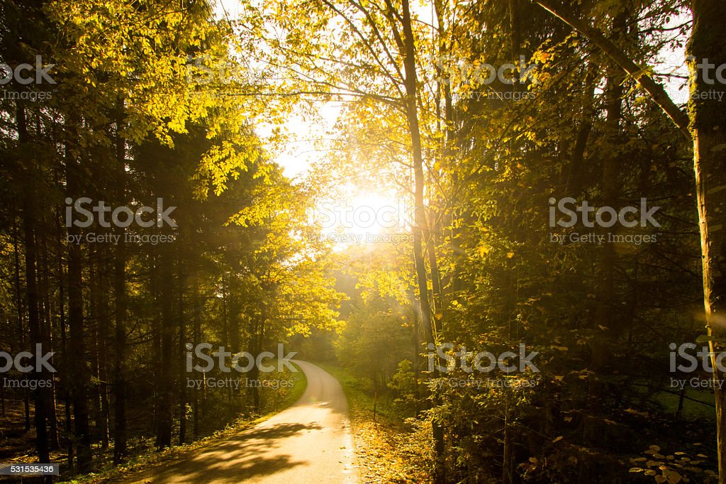 sunrise in forest stock photo