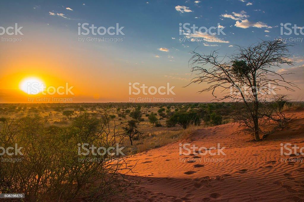 sunrise in Kalahari desert, Namibia stock photo