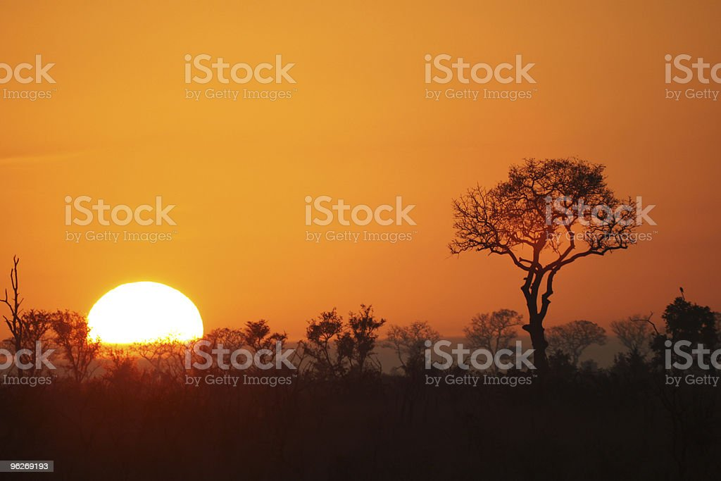 Sunrise in Kruger Park in South Africa stock photo