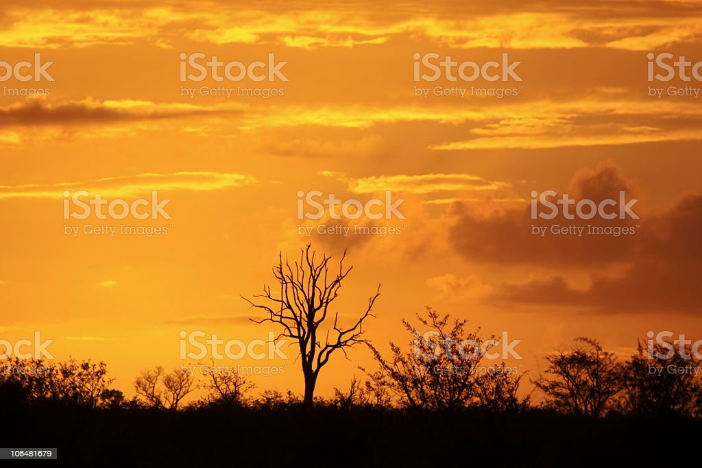 Sunrise in Kruger Park, South Africa royalty-free stock photo