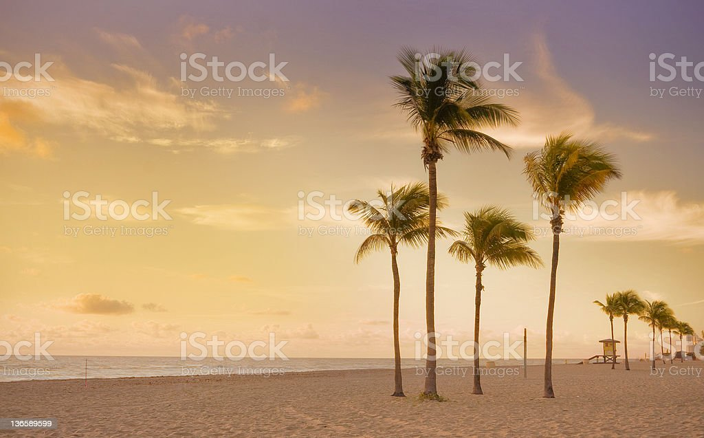 Sunrise in Miami Beach Florida with palm trees stock photo