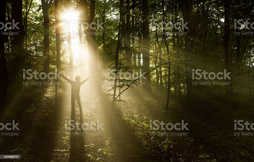 Sunrise in misty forest royalty-free stock photo