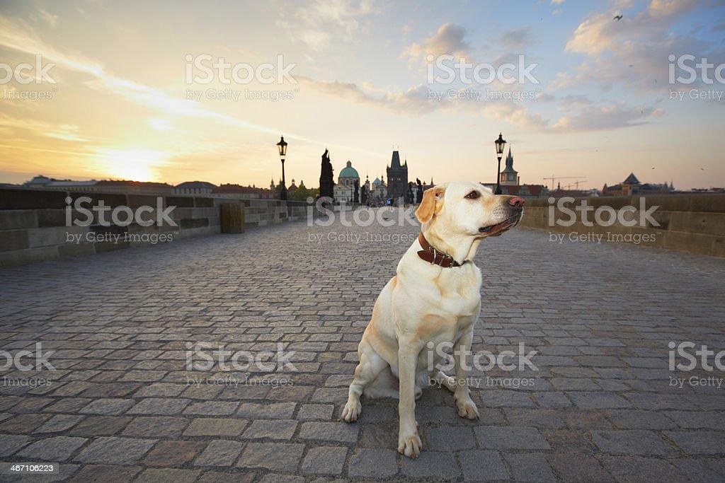 Sunrise in Prague royalty-free stock photo