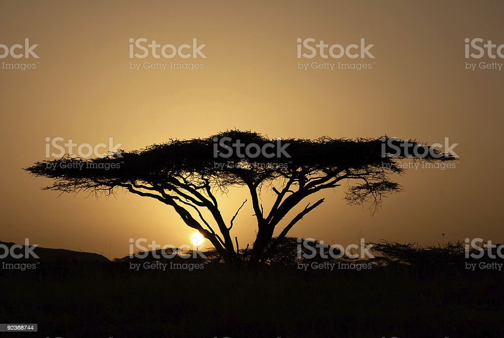 Sunrise in Samburu stock photo