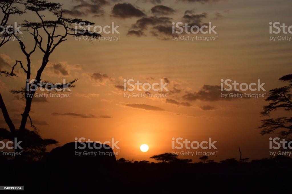 Sunrise in Serengeti stock photo