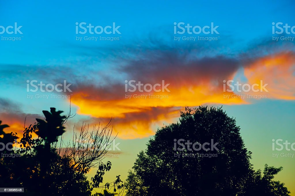 sunrise in summer forest royalty-free stock photo