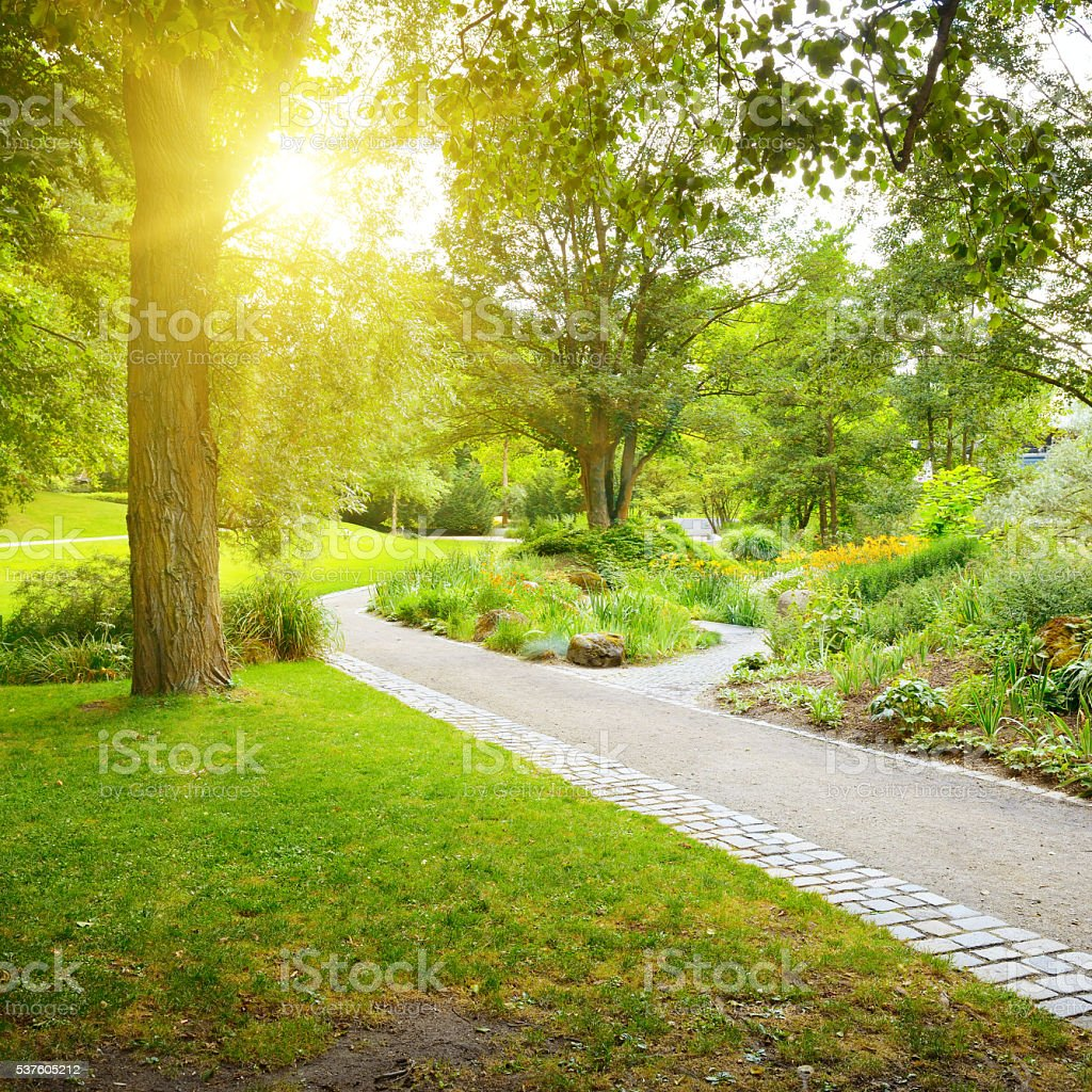 Sunrise in the beautiful park stock photo