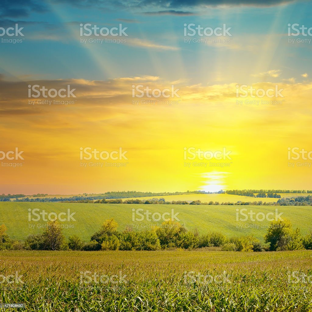 Sunrise in the countryside over a corn field stock photo