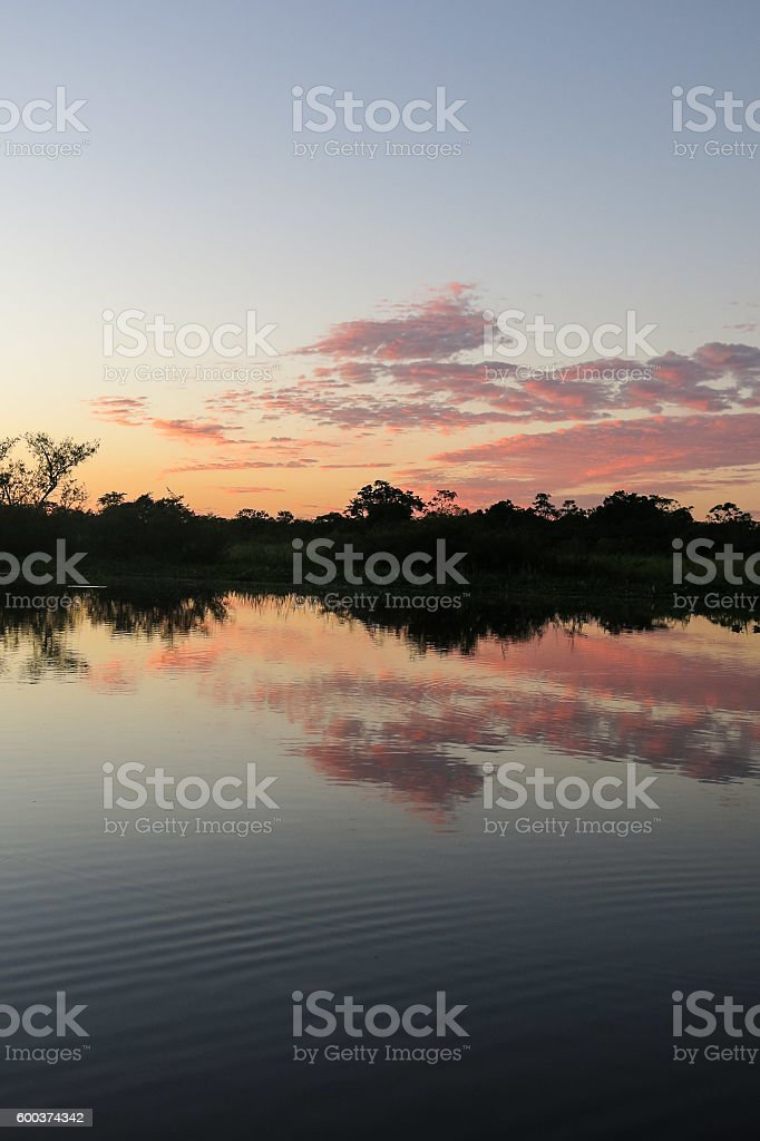 Sunrise in the jungle. stock photo