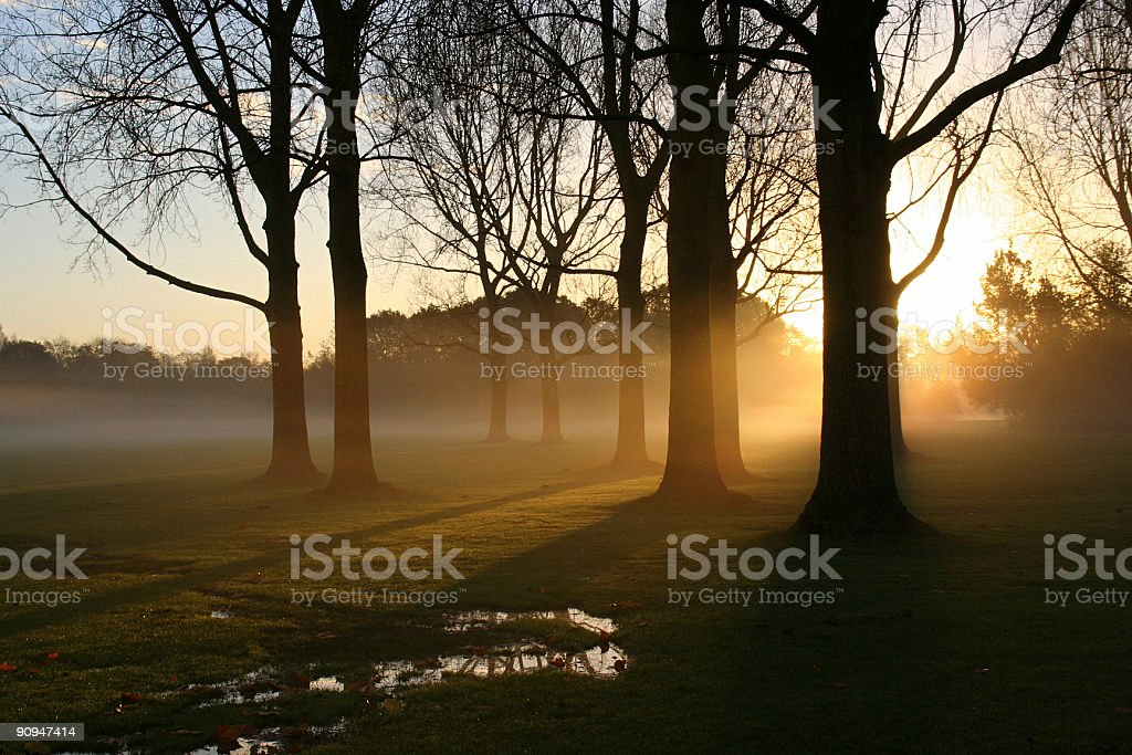 Sunrise in the Park royalty-free stock photo