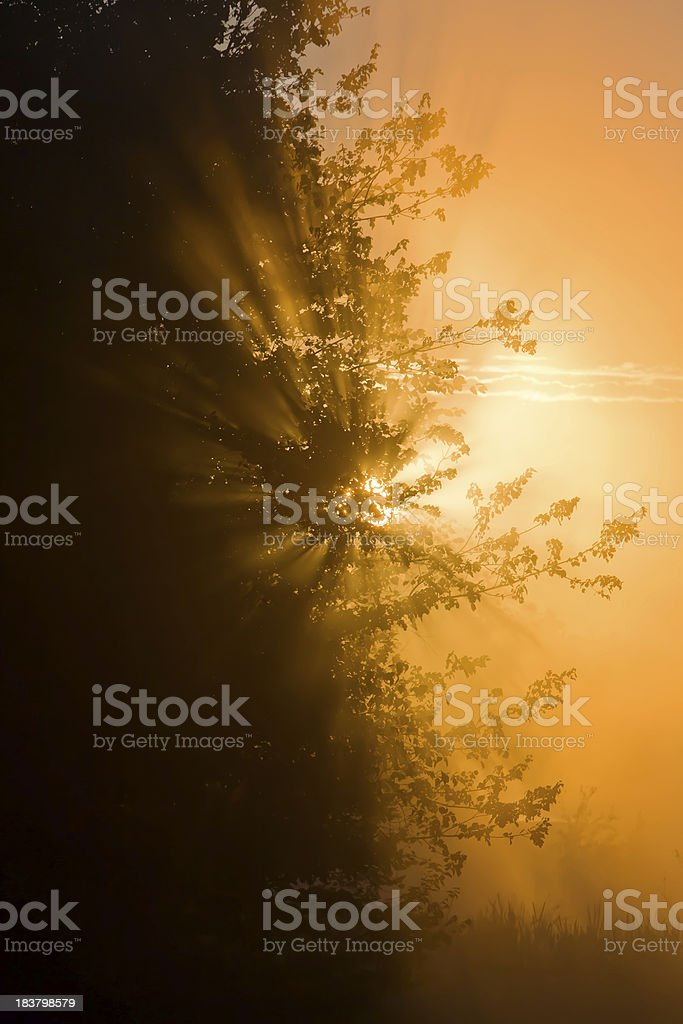 Sunrise in the Pinebarrens, New Jersey royalty-free stock photo