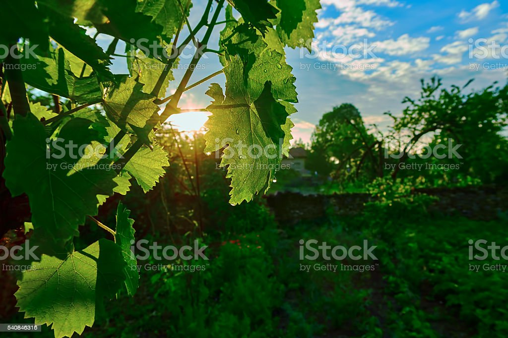 sunrise in the village royalty-free stock photo