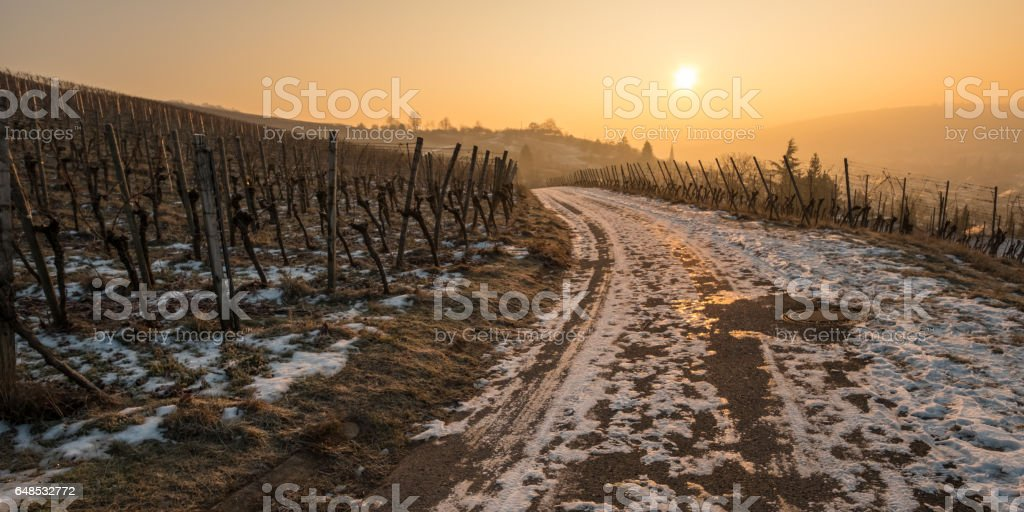 Sunrise in winter in a vineyard with snow stock photo