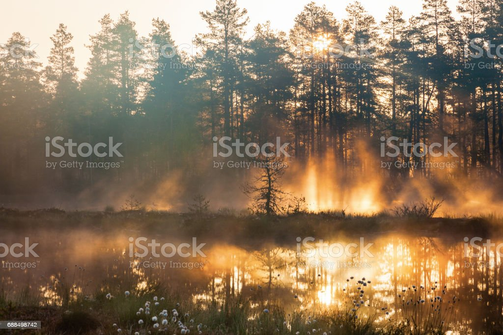 Sunrise in woods stock photo