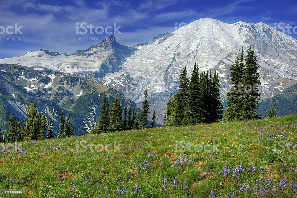 Sunrise Meadow royalty-free stock photo