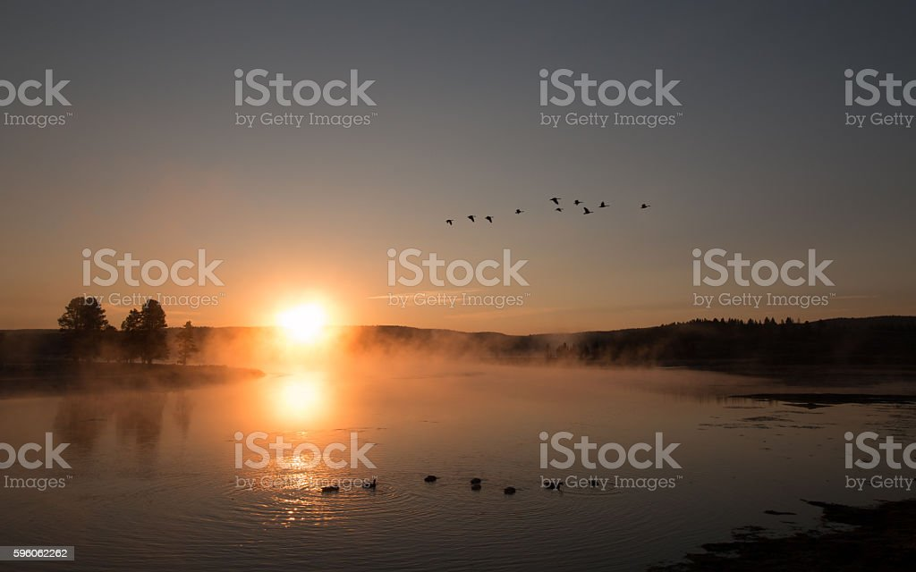 Sunrise mist on Yellowstone River with Canadian Geese flying by stock photo