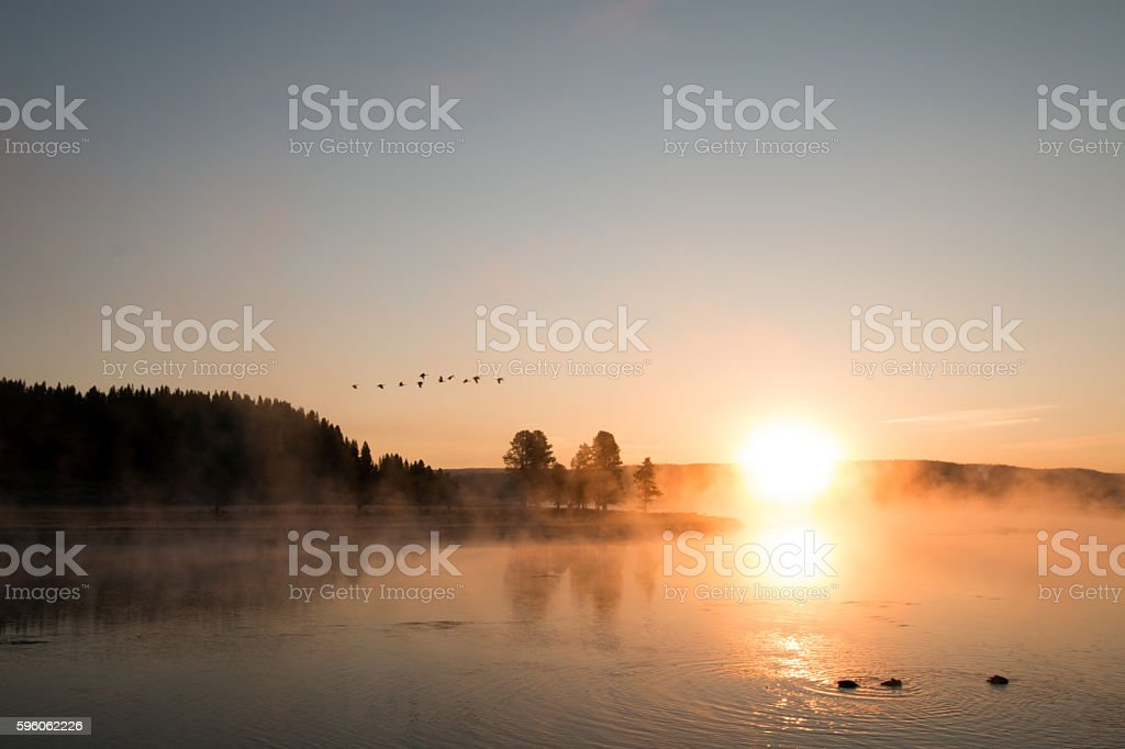Sunrise mist on Yellowstone River with Canadian Geese flying overhead stock photo