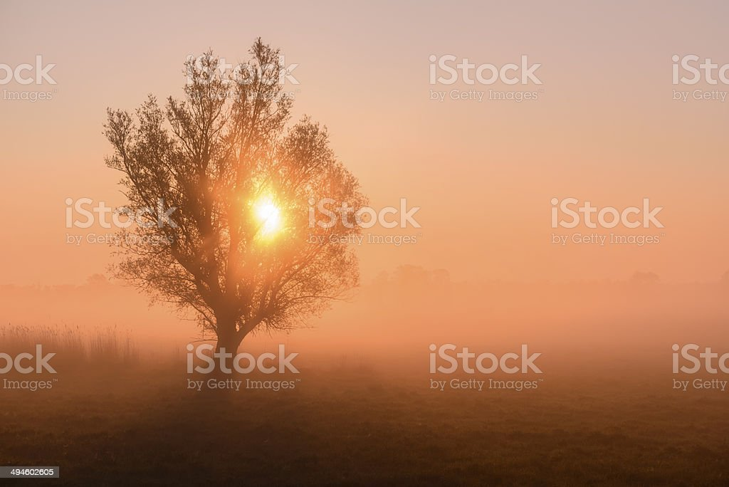 Sunrise, morning sun and tree. royalty-free stock photo