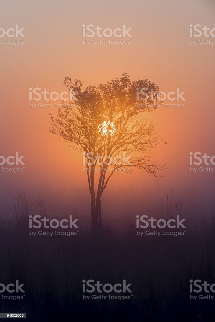 Sunrise, morning sun and tree - vertical. royalty-free stock photo