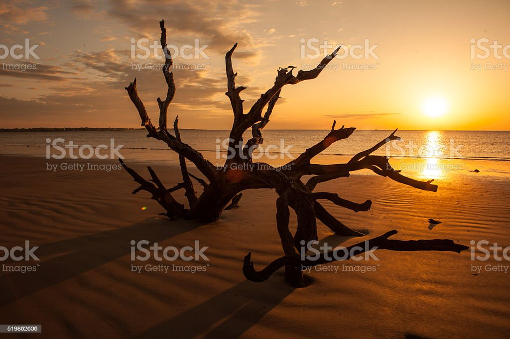 Sunrise on a driftwood beach on Jekyll Island. stock photo