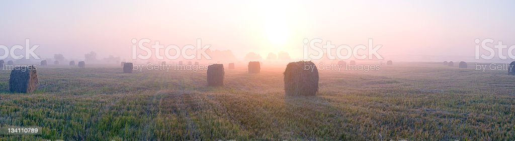Sunrise on a meadow. royalty-free stock photo