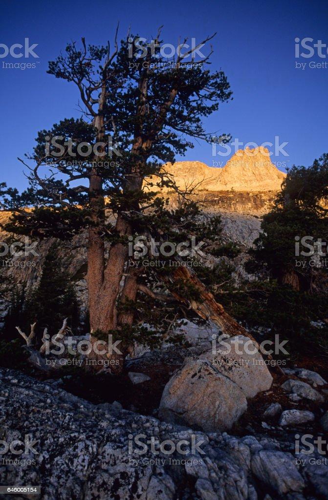 Sunrise on Hoffman peak, Yosemite, USA. stock photo