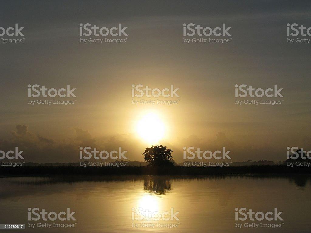 Sunrise on the Amazon Forest stock photo