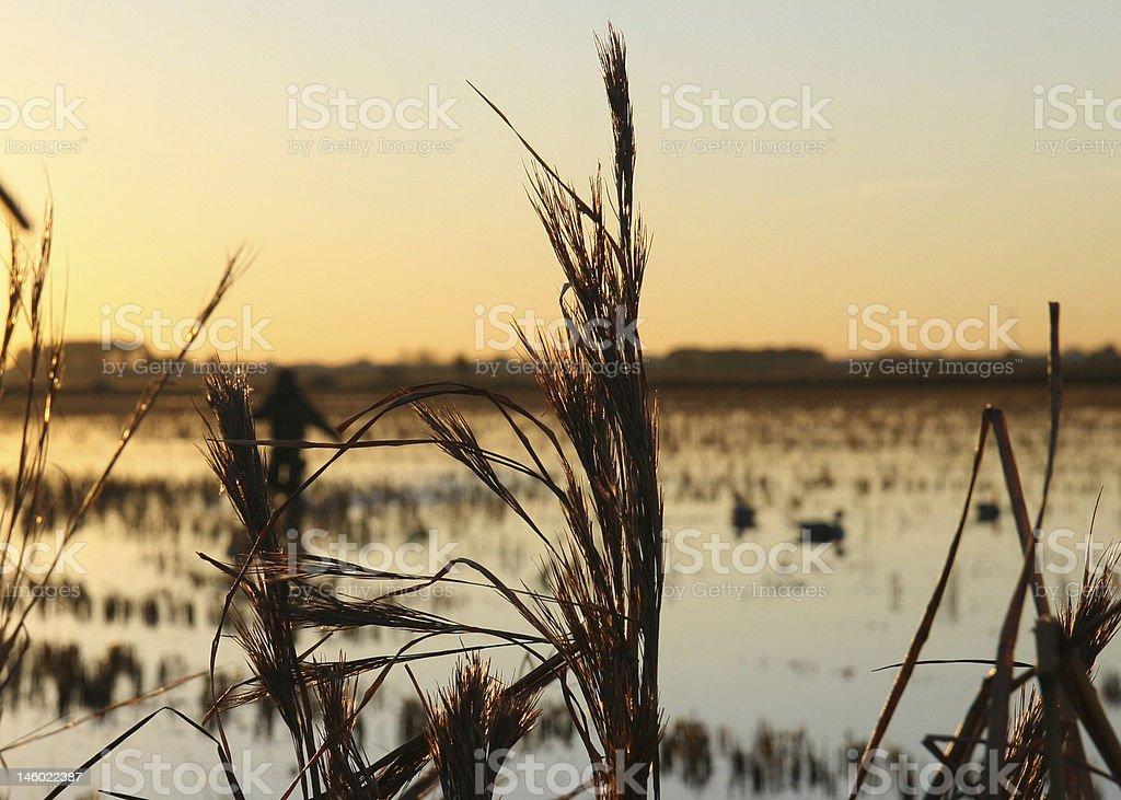 Sunrise on the duck pond stock photo