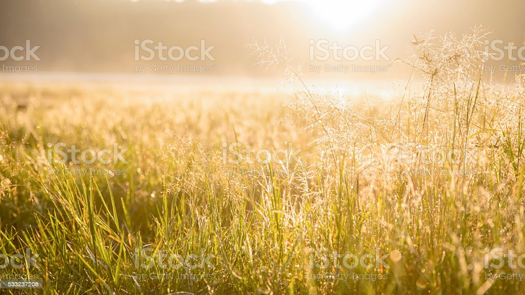 Sunrise on the prairie stock photo