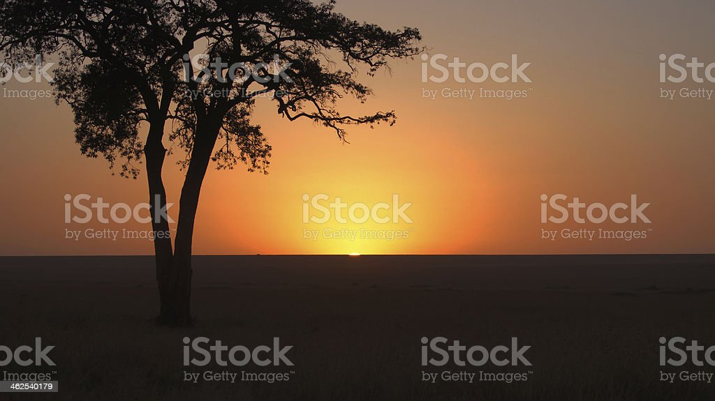 Sunrise on the savanna - Masai Mara royalty-free stock photo