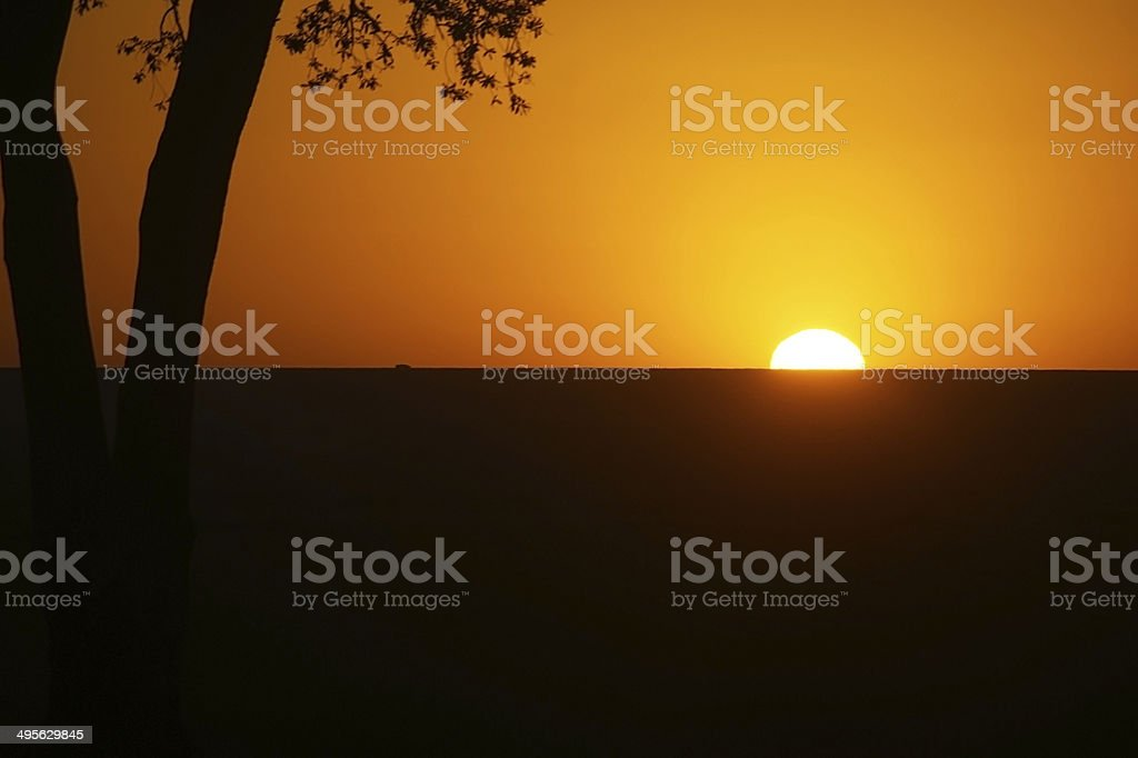 Sunrise on the savanna - Masai Mara stock photo
