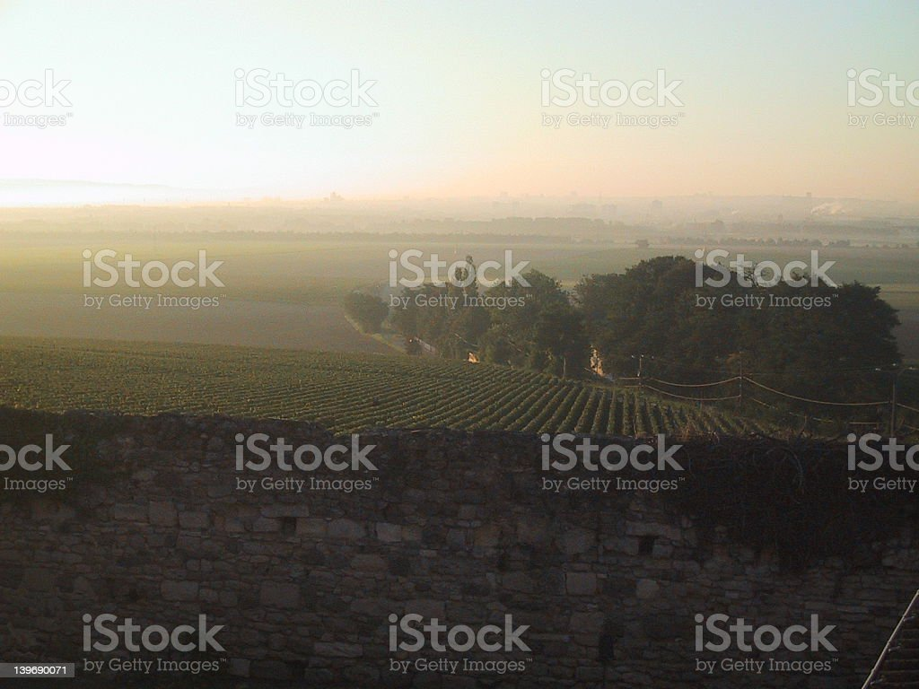 Sunrise over a Champagne Vineyard royalty-free stock photo