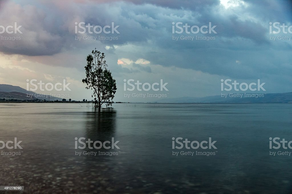 sunrise over a lake, single tree in the water stock photo