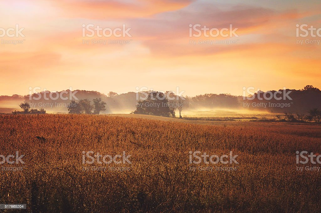 Sunrise over a meadow. stock photo