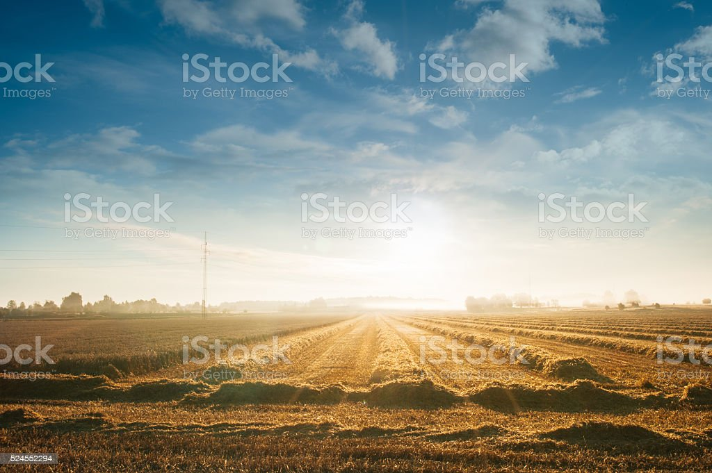 Sunrise over field with freshly harvested hay. stock photo