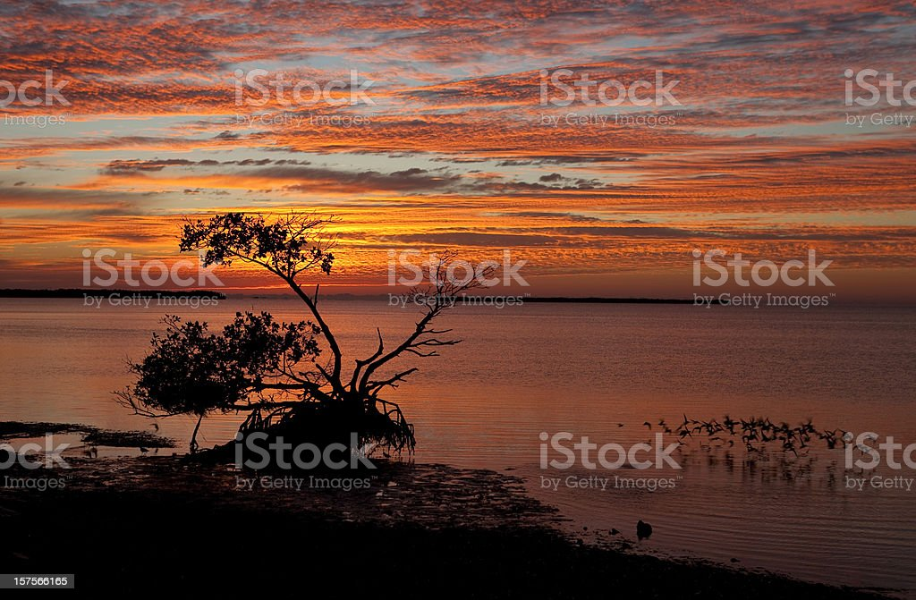 Sunrise Over Florida Everglades National Park stock photo