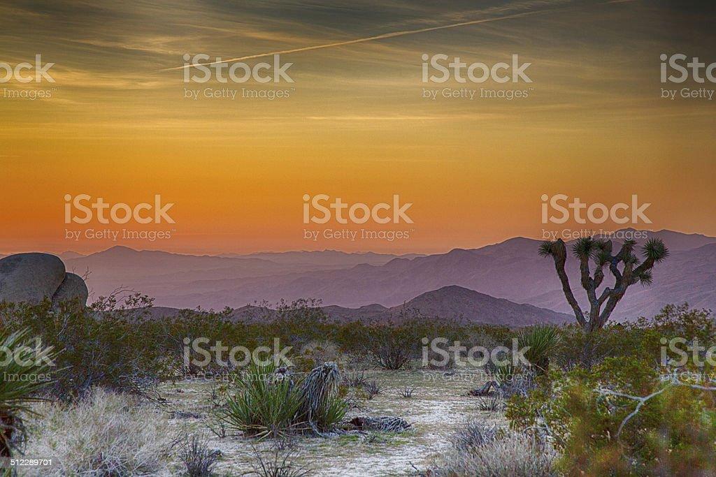 Sunrise over Joshua Tree stock photo