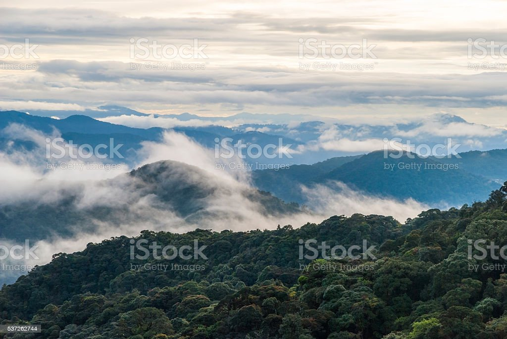 Sunrise over jungle in cameron highlands, Malaysia stock photo